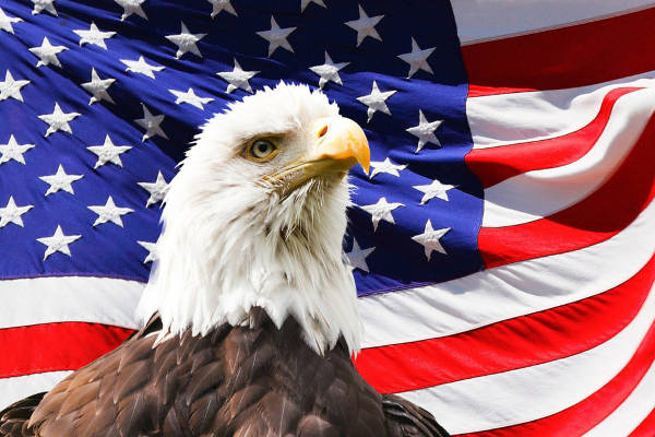 shipping from usa to australia eagle